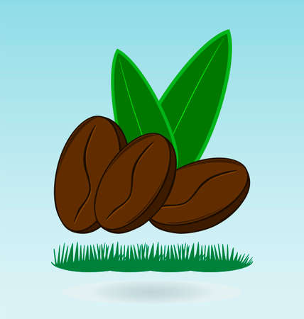 expresso: coffee bean natural, grass concept