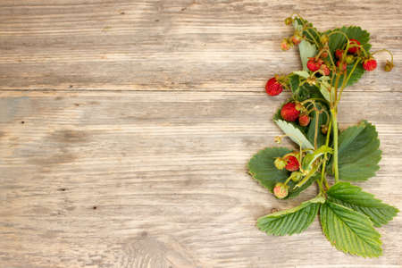 ripe strawberry on a wooden background. Copy space to right.. Copy space to right.