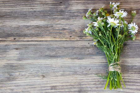 Bouquet of Garden Small Camomiles  on Rustic Wooden background with copy space Standard-Bild