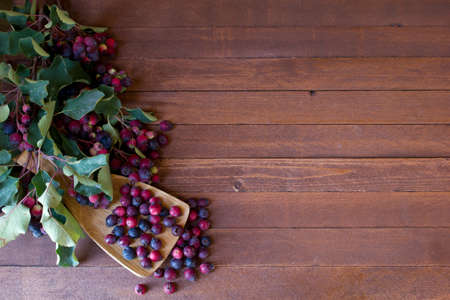 Bunch of first wild autumn berry, Saskatoon in front of dark wooden background  with copy space