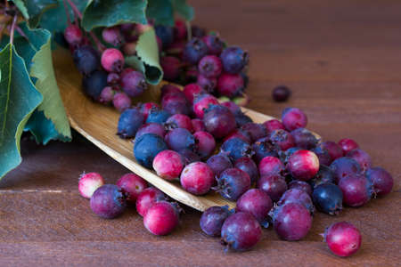 Bunch of first wild autumn berry, Saskatoon in front of dark wooden background Imagens