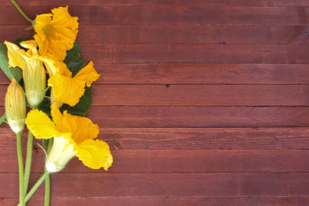 tendrils: Yellow zucchini, pumpkin flowers , leaves and tendrils on wood Stock Photo