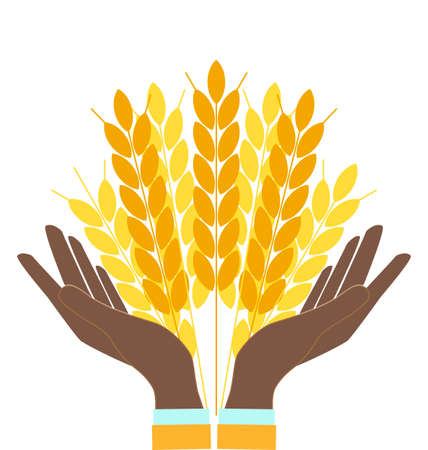 grain fields: Hands holding wheat ears, agribusiness, agrobusiness