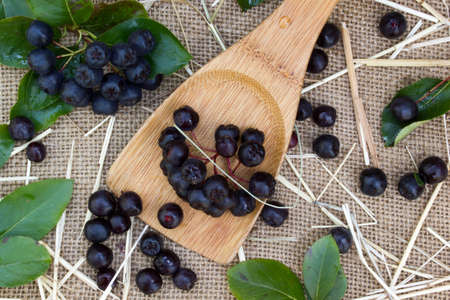bacca: Black chokeberry in a spoon on burlap sack background Stock Photo