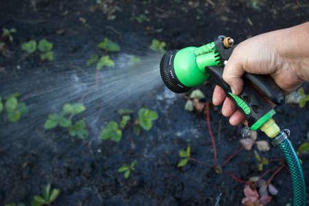 regar las plantas: Regar las plantas en el jard�n
