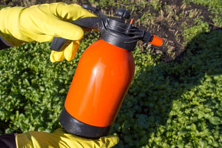 sprayer: Protecting plant from vermin, spring garden work. Hand sprayer garden.