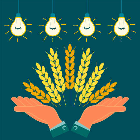 agribusiness: Ears with Golden grains of wheat in his hands. Agribusiness, investment in agriculture. To save the harvest.