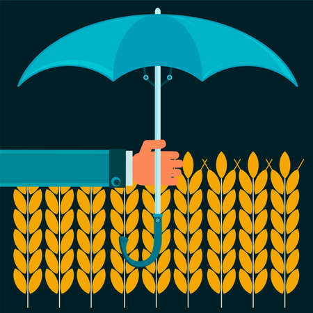 protectionism: Gold ears of wheat under the protection of the umbrella. Protectionism of agriculture. To protect the grain harvest. Torrential rains flooded the fields. Illustration
