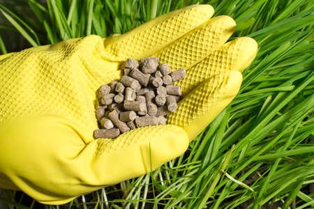 fertilizer: Fertilizer in hand on background of green grass
