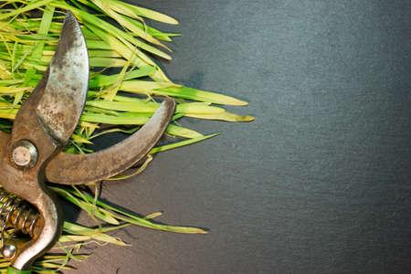 pruner: Garden pruner on the green grass, top view.
