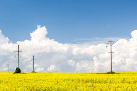 Rapeseed field and towers power lines the horizon under Cumulus clouds on a Sunny summer day