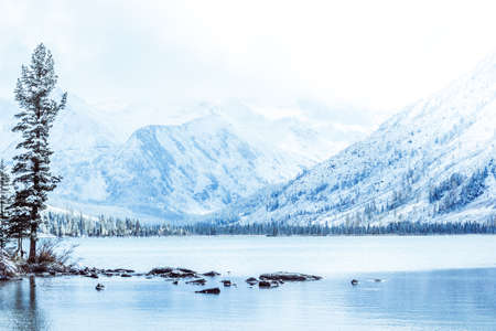 Winter mountain lake with snow-covered pine trees on the shore. Frosty weather in the Altai mountains, fog over the winter lake.  A number of snow-covered trees on the river.