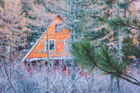 Wooden house in pine forest. Building is hidden behind trees. Outdoor recreation. Mystery house, secret hunting lodge.