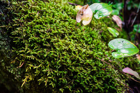Green carpet of moss in sunny forest