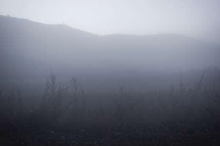 Morning mist in early morning in field