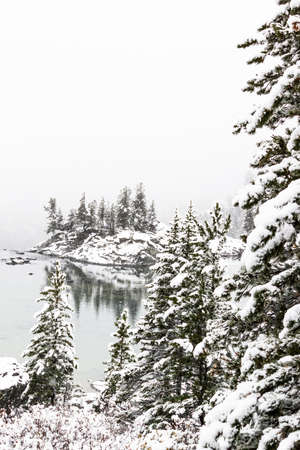 Winter forest on shore of mountain lake. Snow on pines, snowfall