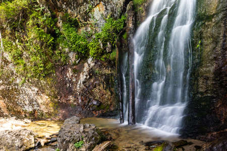 Mountain waterfall in summer forest. River with wet stones and plants on shore.