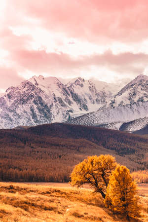 Autumn in mountain valley. Mountain range and yellow forest on horizon