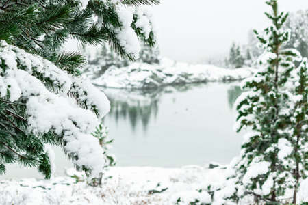 Winter forest on shore of mountain lake. Snow on pines, snowfall Imagens