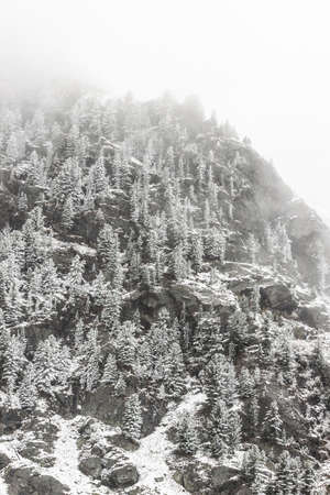 Winter in mountains. Snowy pines on hillside, frosty weather in forest after snowfall