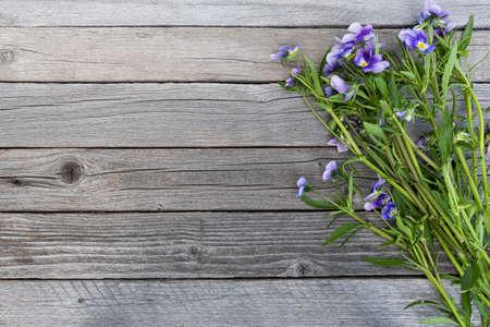 Bouquet de violettes violettes sur table en bois. Vieilles planches avec des fleurs de jardin
