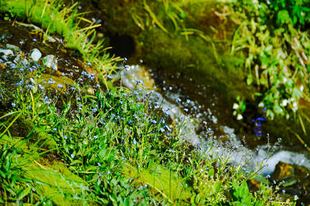 Mountain stream in green valley. Rocks and stones in swirling riverbed. Watering in pasture