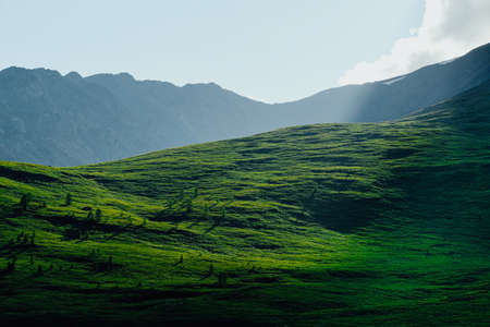 Gentle green hills. Mountain valley for pasture with soft slopes covered with green grass Zdjęcie Seryjne