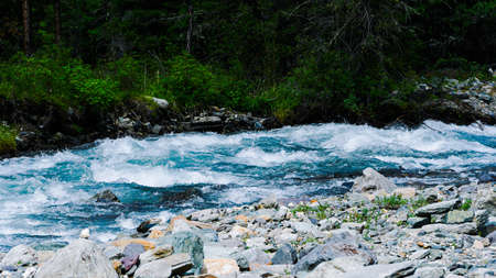 Mountain river in Siberian taiga. Fast stream in coniferous forest. The nature of Altai mountains for Hiking and water travel Zdjęcie Seryjne