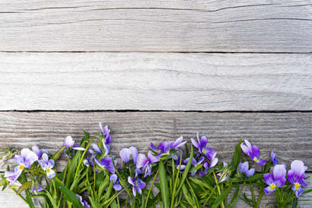 Bouquet of purple violets on wooden table. Old boards with garden flowers