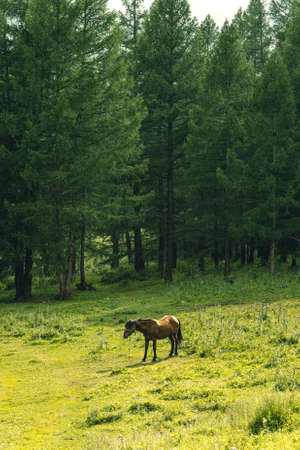 bay horse grazes on green meadow on summer day Imagens