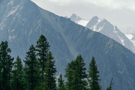 Pine forest on background of mountain peaks. Tourism in mountain valley Imagens