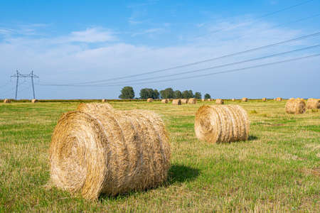 dry hay rolls for cattle feed, grass harvesting for cows, harvesting wheat and oats in field
