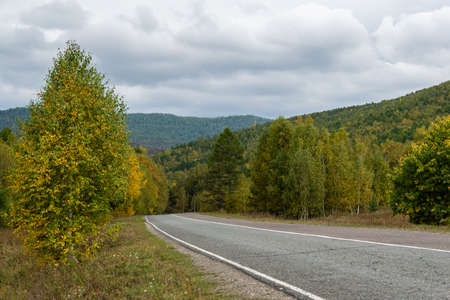 road in autumn forest with yellow leaves, asphalt pavement with markings, mood of nostalgia in journey