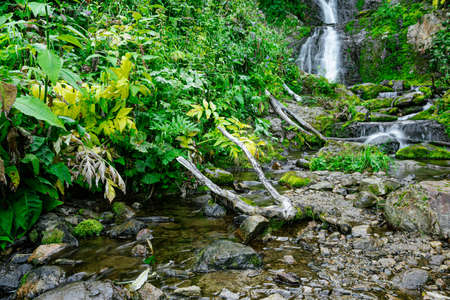 Forest stream in rainforest. Waterfall among mossy rocks and greenery. Mountain river on summer day. Nature landscape with cascades of mountain creek among lush thickets in forest.