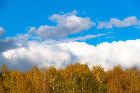 Thick clouds over row of autumn trees