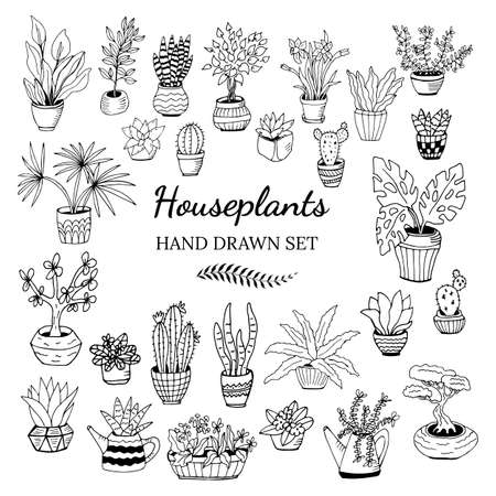 Set of hand drawn house plants in pots. Big set cute of hand drawn house plants in pots including cactus, dracena, aloe and others, and garden tools.
