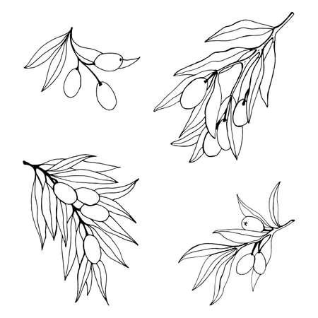 Vector olive branch hand drawn sketch. Set of olive branch illustrations. Design elements for poster, label, emblem, sign, banner. Vector illustration.