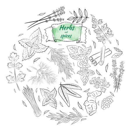 Herbs and spices collection. Vector Collection of hand drawn Spices and Herbs. Botanical plant illustration. Vintage Medicinal Herbs and plants.