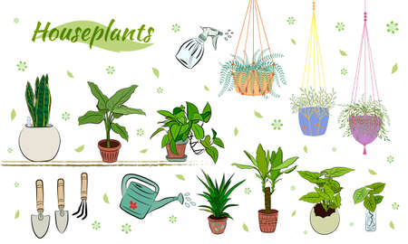 Set of hand drawn house plants in pots. Big set cute of hand drawn house plants in pots including cactus, dracena, aloe and others, and garden tools. Vector collection of doodle plants.