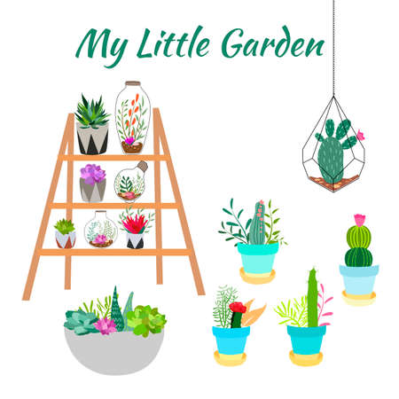 Set of indoor plants in pots for home and office. A large collection of cute houseplants in pots including cacti, aloe and other succulents. Vector collection of doodle plants.