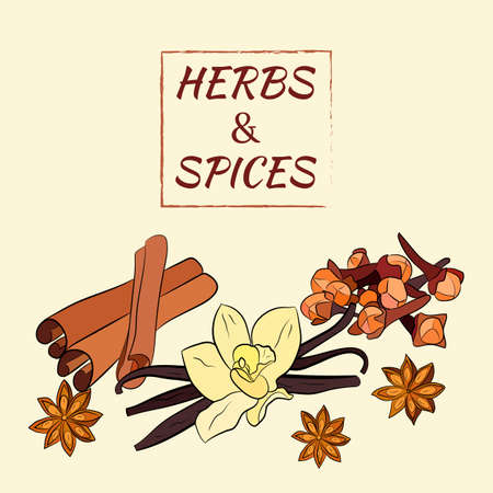 A large set of culinary spices and herbs. Popular culinary plants, natural health care. Vintage Medicinal Herbs and plants. Vanilla and cinnamon, cloves and star anise.