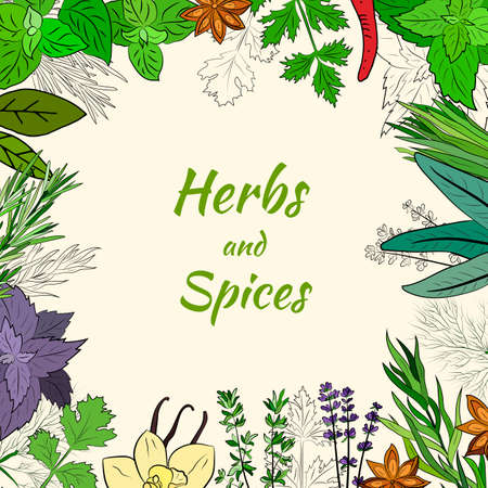 A large set of culinary spices and herbs. Popular culinary plants, natural health care. Vintage Medicinal Herbs and plants. Mint and rosemary, basil, thyme, parsley, dill, bay leaf, oregano, sage.