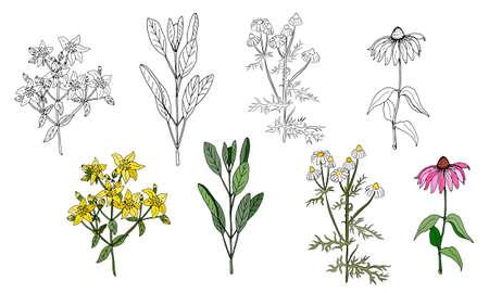 A set of medicinal herbs and plants. Collection of hand drawn flowers and herbs. Botanical plant illustration. Vintage medicinal herbs sketch. Ilustração Vetorial