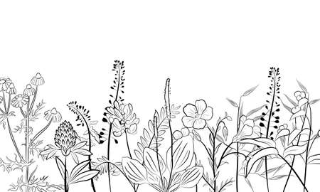 Hand drawn set of wildflowers and herbs. Sketch of summer flowers, herbs and leaves. Collection of meadow plants. Botanical illustration. Decorative elements for summer and spring desing.
