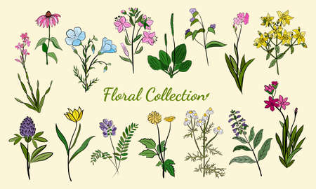 Hand drawn set of wildflowers and herbs. Sketch of summer flowers, herbs and leaves. Collection of meadow plants. Botanical illustration. Decorative elements for summer and spring desing. Vettoriali