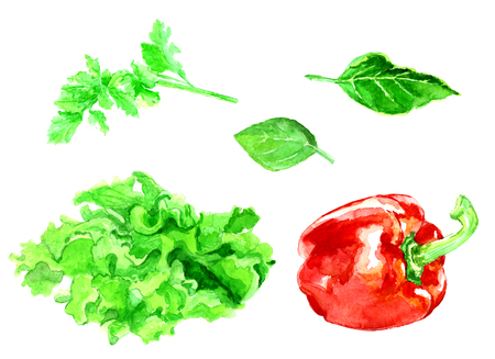 Vegetables painted watercolor. Sweet pepper, parsley, mint, lettuce on white background