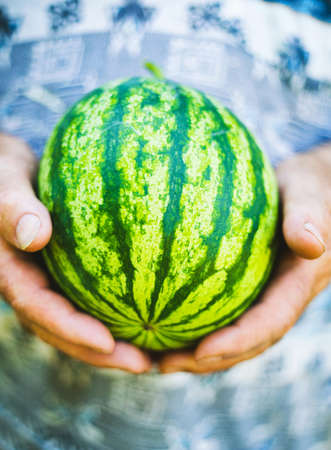 Small watermelon in large old man hands. Summer photo concept. Fruit Background. Sweet Green Organic Ripe Watermelon. Healthy Raw Diet Food. Healthy food concept