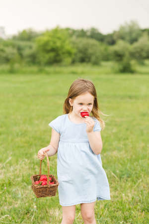 Little blond girl in a blue dress in the garden.  Little girl laughing and having fun. A little girl is holding a basket with strawberries. Little girl eating strawberry Stock Photo