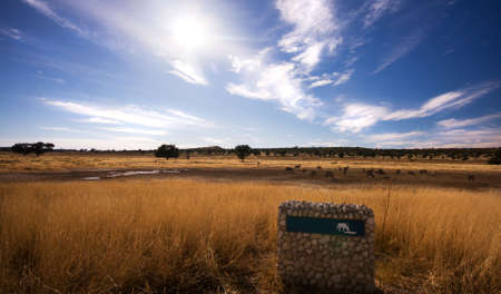 pano: Pano landscape of a watering hole in the Kgalagadi Transfrontier Park Stock Photo