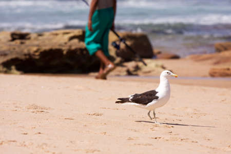 Curious seagull and fisherman on beach photo